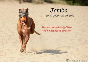 jambo-in-memoriam