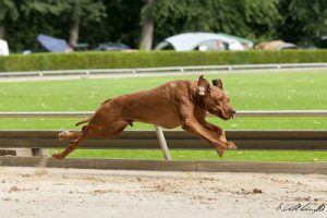 rusty-coursing
